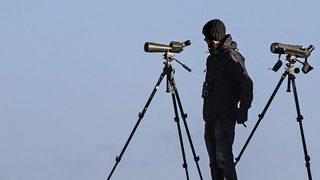 近くのものも拡大して見てみよう 美術品鑑賞や野生観察に便利な単眼鏡